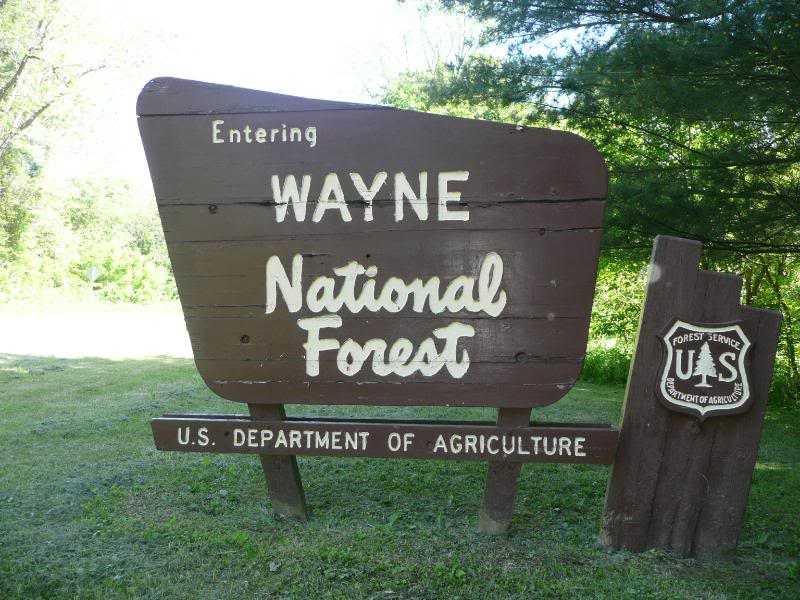 wayne national forest | things to do in nelsonville