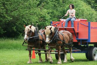 Horses pulling wagon