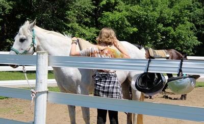 Horses at camp 1