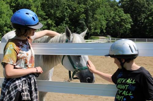 Horses at camp 2