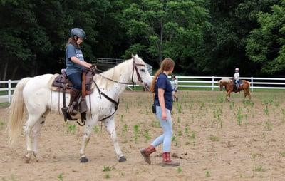 Horses at camp 4