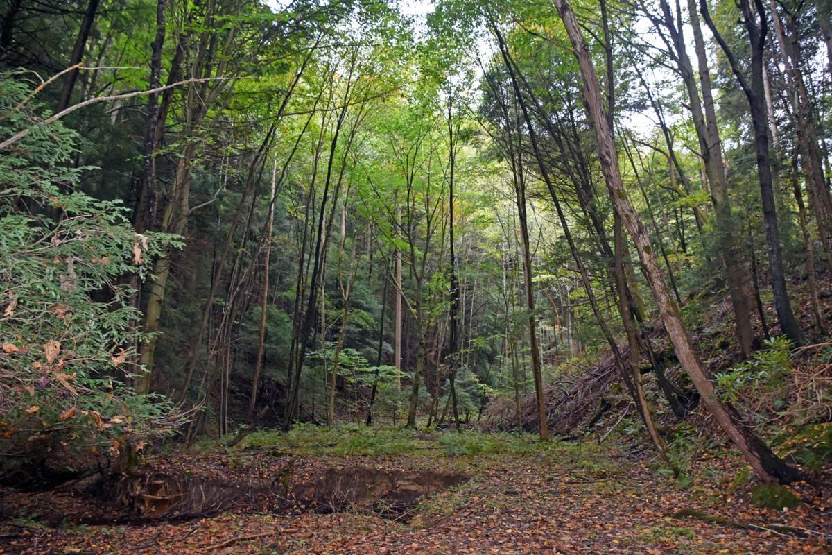 Stone Fence Hill Hike