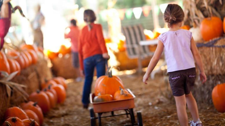 pumpkin-patches-1
