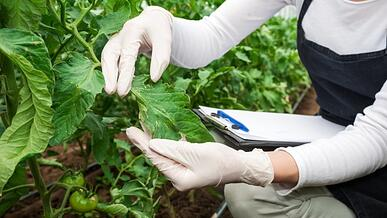 become an agroecologist