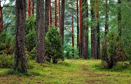 Forest | Feeling Stressed? Park Prescriptions Are The Latest Trend in Medicine