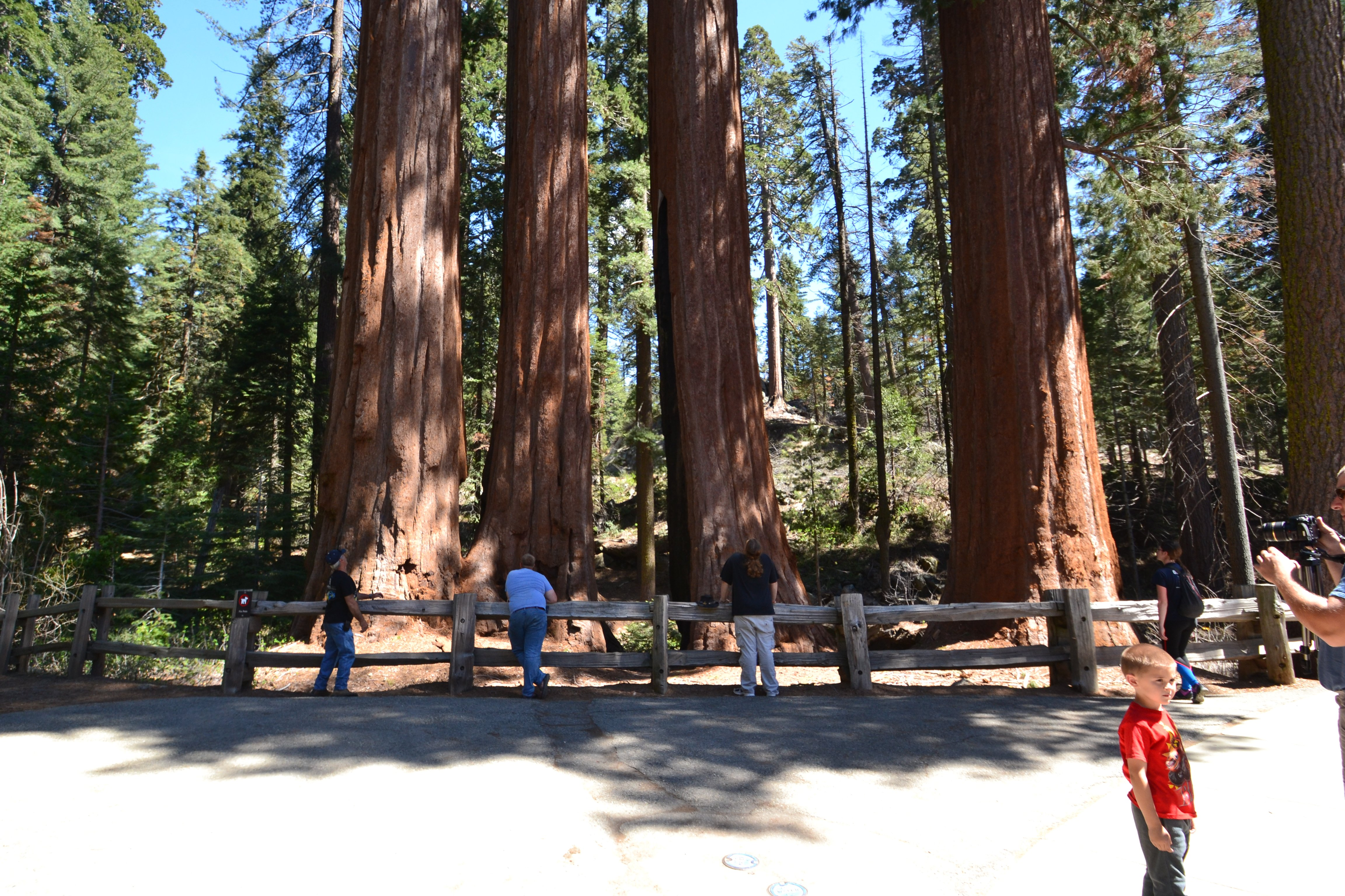 On lookers of a few Giant Sequoia Trees Spring 2017