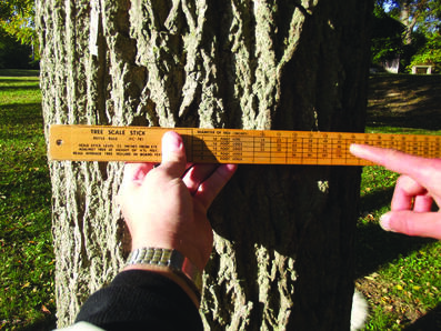 Tree Scale Stick measuring a tree trunk | About Hocking College's Forestry Program