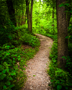 Trail through lush green forest in Codorus State Park, Pennsylvania.