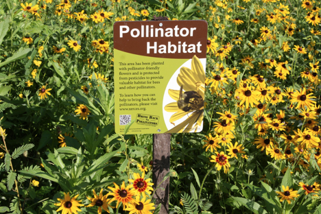 Hocking College Pollinator Habitat | Hocking College Launches New Natural Resources Conservation Contractor Certificate and Pollinator Habitat
