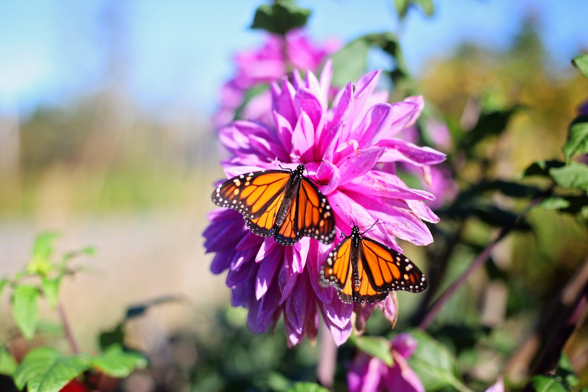 Butterflies Pollinating Flowers | Hocking College Launches New Natural Resources Conservation Contractor Certificate and Pollinator Habitat